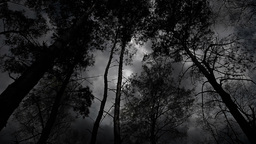 Scary black and white trees during the storm Live Action