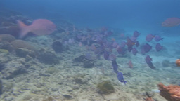 Caribbean Snorkeling stock footage