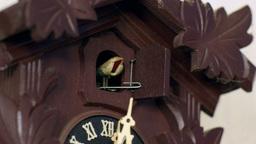 cuckoo clock cuckoos 12 times 11345 Footage
