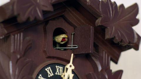 cuckoo clock cuckoos 12 times w weights intercut Footage