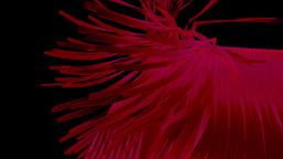 7 flower 16 Animation