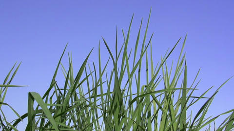 Juicy Grass stock footage