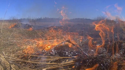 spring fire in the nature on a meadow Footage