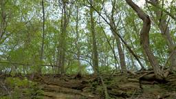 4K Under Forest Footage