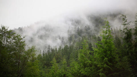 Forest and clouds timelapse Footage