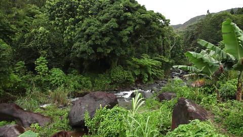 Lush Jungle stream past leaf Footage