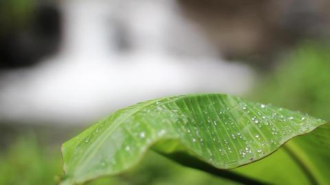 Lush Jungle stream with leaf Footage
