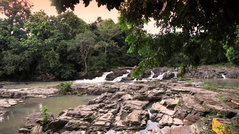 Jungle river and tree Footage