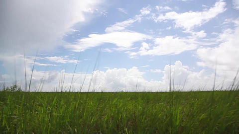Marshland grass passing Footage