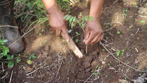 Planting tree Stock Video Footage