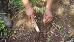 Planting tree Live Action