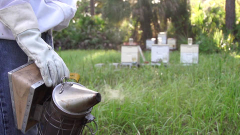 Beehive smoker and hives slow motion Footage