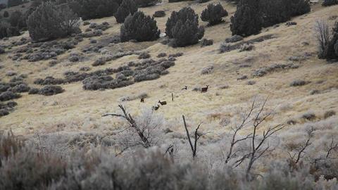 Deer wintertime Footage