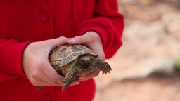 Girl holding turtle Footage