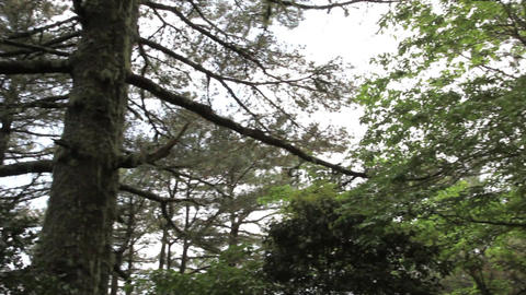 around the forest tree and sunlight Footage