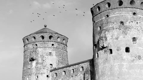 Jackdaws At The Old Castle stock footage