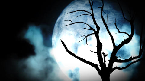 Bleak moonlight scene Stock Video Footage