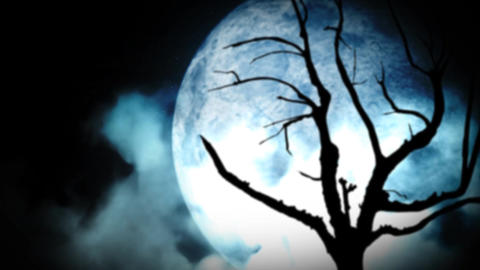 Bleak Moonlight Scene stock footage