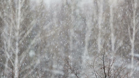 heavy snowfall on the background of snowy trees Footage