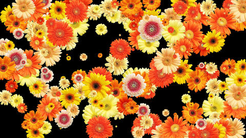 flower and flower Stock Video Footage