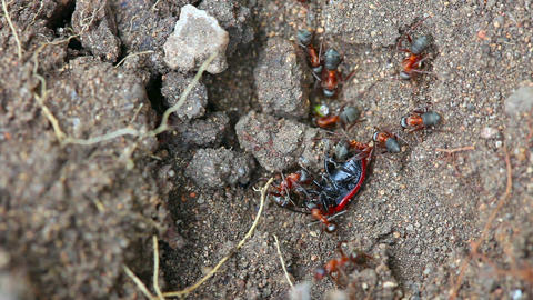 Ant nest Live Action