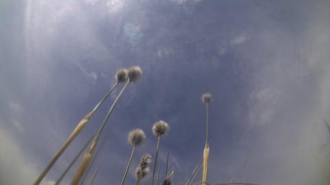 plant on a wind under quickly flying clouds Footage