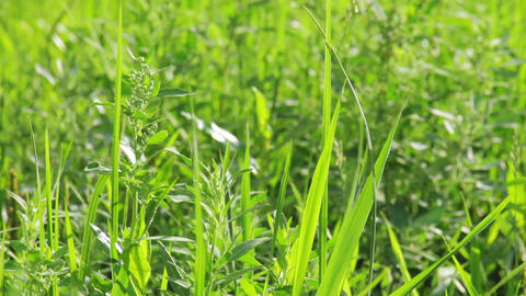 Closeup tilt shot of green vibrant grass in summer Footage