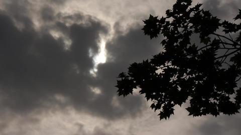 Gloomy Spooky Dark Sky With Trees 1 Footage