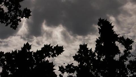 Gloomy Spooky Dark Sky With Trees 3 Footage