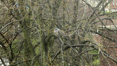 Frozen pigeon perched on a tree Footage