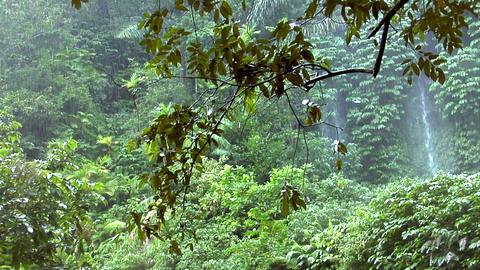 rain forrest waterfall Stock Video Footage