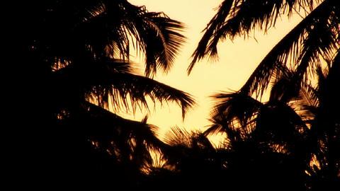 Sunrise / Sunrise Silhouette of coconut trees Stock Video Footage