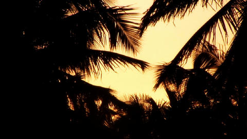Sunrise / Sunrise Silhouette of coconut trees Footage