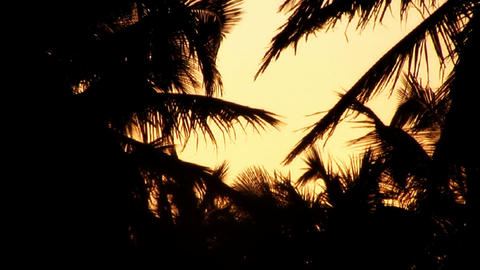 Sunrise / Sunrise Silhouette of coconut trees Stock Video Footage
