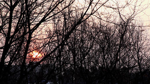 Winter sunrise with trees silhouette Footage