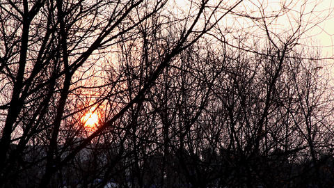 Winter sunrise with trees silhouette Stock Video Footage