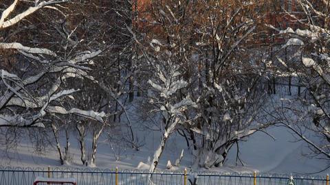 1374 Winter Pan Tree Playground HD J96 Stock Video Footage