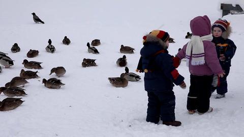 1659 Child Duck HD J96 Stock Video Footage