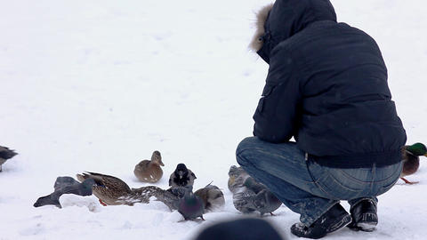 Man feed duck winter park Footage