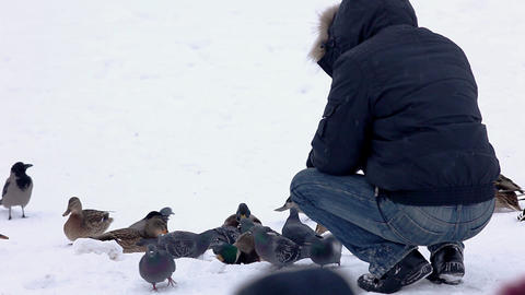 Man feed duck winter park Stock Video Footage
