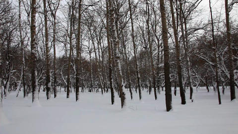 Panorama at winter park Stock Video Footage