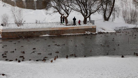 pan on lake with ducks in winter park Stock Video Footage