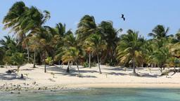 Costa Maya Beach 1 Footage