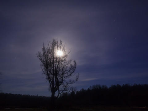 Moon behind the branches. Time Lapse. 4x3 Footage