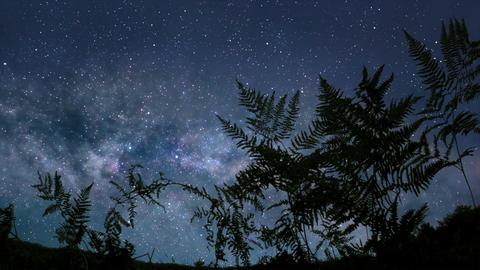 Calm starry night Footage