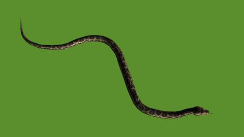 Snake&jungle carpet python slide attack,sliding decorative non venomous Live Action