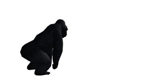 Chimp & Chimpanzee attack,Endangered wild animal Footage