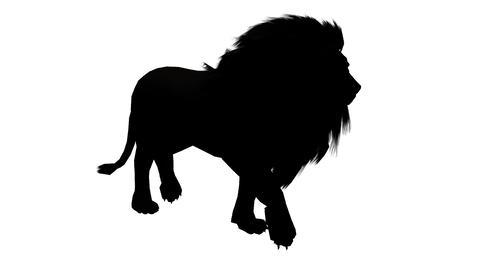 Lion fast walk,Endangered wild animal wildlife walking sketch silhouette Live Action