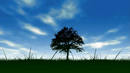 tree and sky background Footage