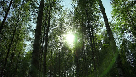 The sun shines through the trees. 4K Footage